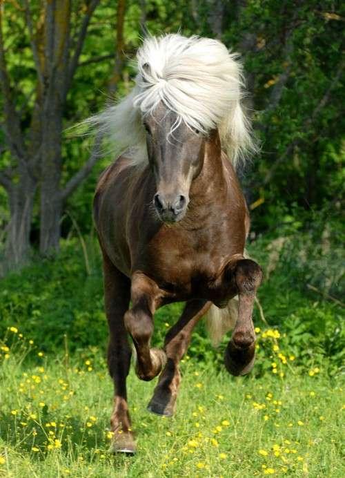 كل واحد يحط صورة حيوانه المفضل horses15.jpg